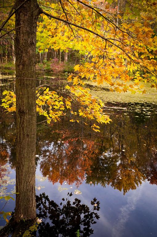 2011 10-24 LS Walk, Irrigation Pond, Orange Maple Entrance-37