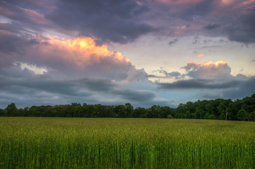 2014 5-23 Dorbrook Park Sunset Tall Grass-15_6_7