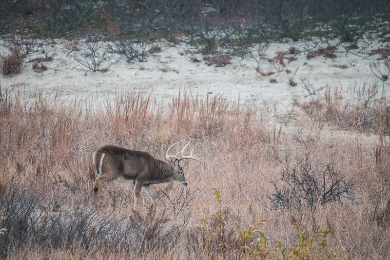 2016 11-25  Sandy Hook Deer-120_Full_Res