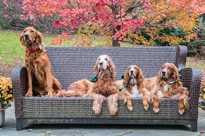 2018 11-8 Hockhockson Brook - Kelleher Dogs-177_Full_Res