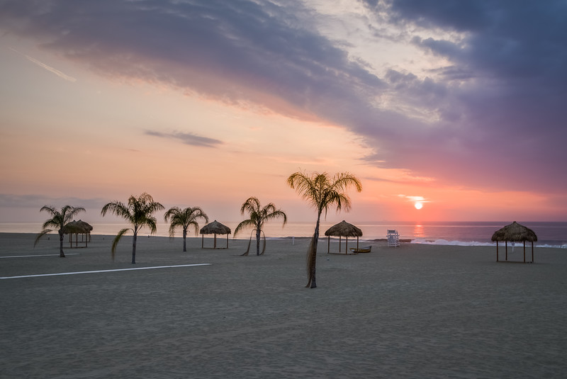 2016 7-1 Surfrider Beach Club Many Palm Trees-200_Full_Res