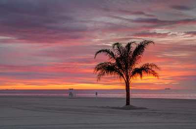 2015 5-21 Surfrider Palm Tree Sunrise-15_6_7