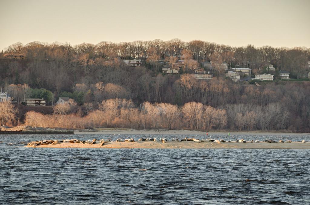 2014 12-26 Christmas Seals Sandy Hook Return-207_8_9