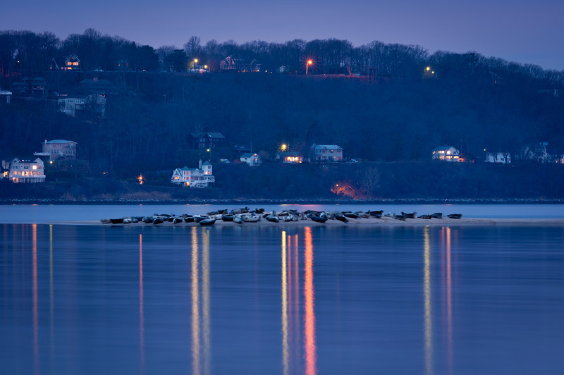 2012 2-2 Sandy Hook Seals and Twin Lights at Dawn-5