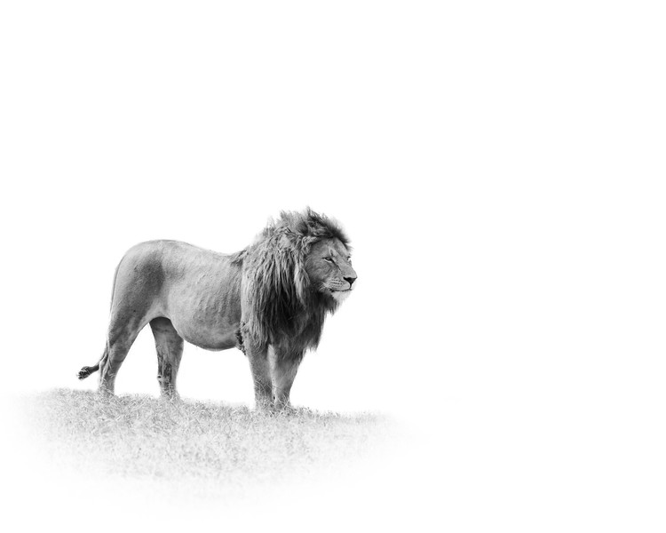 lion ISO 2
