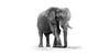 elephant ISO 1632