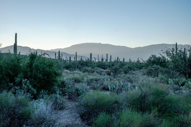 186: Early Morning, Tucson, Arizona, USA