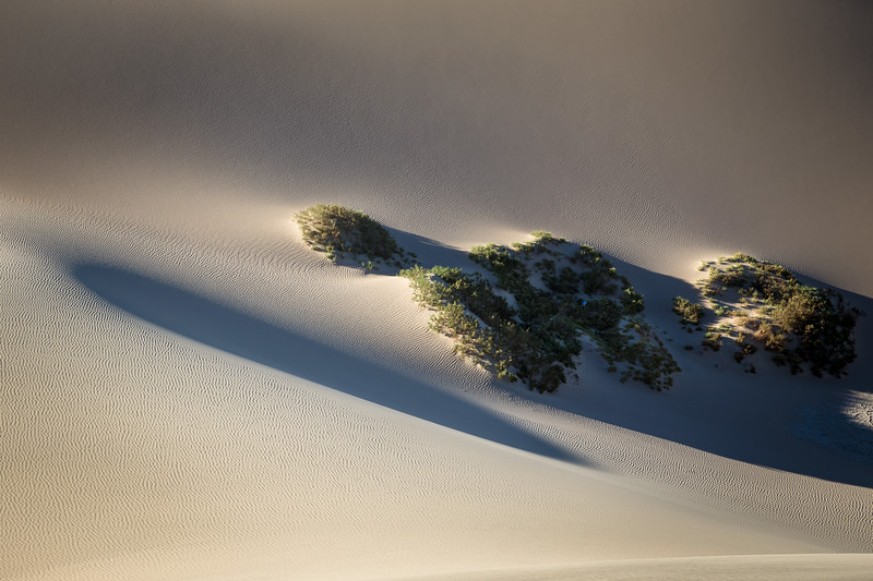 Long Shadows on the Dunes, Death Valley