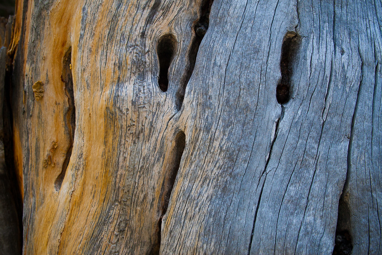 Tree Stump Detail #2