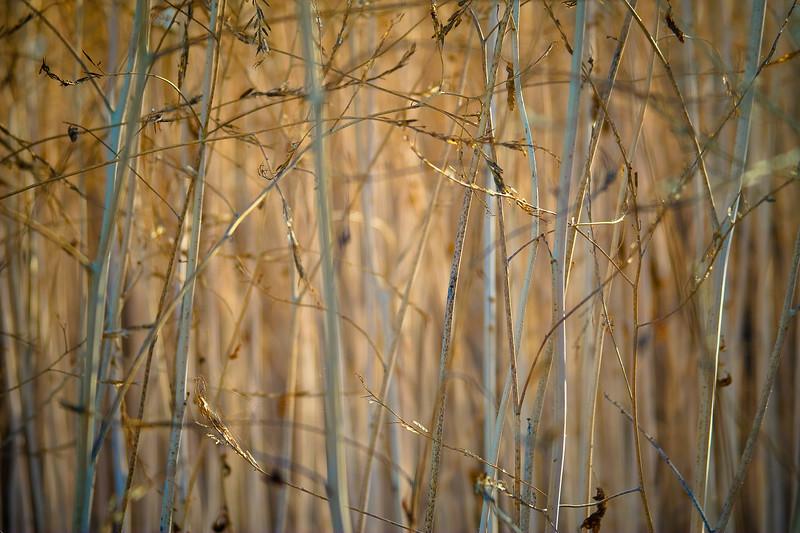 Long Grass Detail