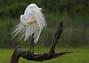 Egret pruning