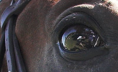 Look!  That is ME reflecting in the horse's eye, taking his picture!  (I told him not to blink)