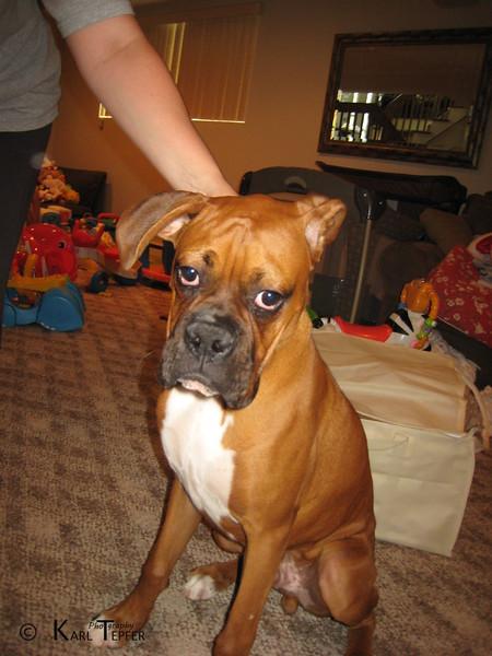 Sonny, 5 months old. Named after Sonny Liston, the Boxer.