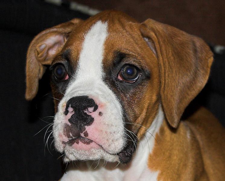 Lexxie as a puppy
