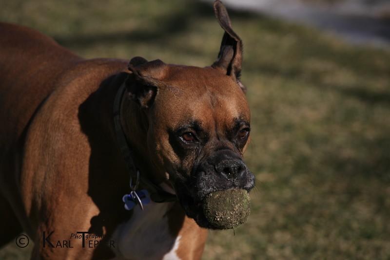Tyson with a frozen tennis ball.
