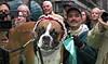 "Macy's annual ""Barkfest"""