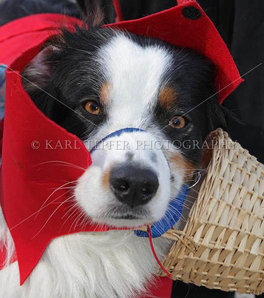 Old Westbury Gardens canine Halloween Costume Contest.