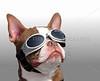 Harley Davidson Dog