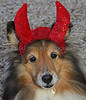Devil Dog. Old Westbury Gardens canine Halloween Costume Contes