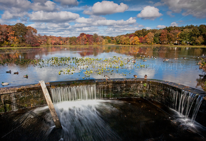 First colors of Autumn at Mill Pond, Bellmore New York