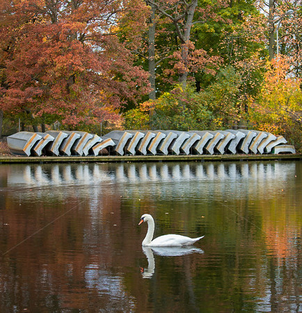 Row Boats safely secured for the winter. Fall colors emerging in Belmont Lake State Park,   This graceful swan paddled into my composition just as I was about to leave. Babylon, New York