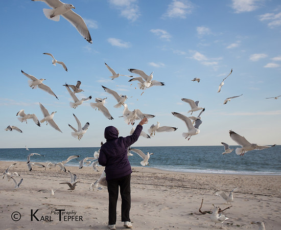 Feeding the seagulls at Jones Beach, New York. Atlantic Ocean in background