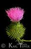 """Flower <br />  (c) 2008 Karl Tepfer"""""""""""