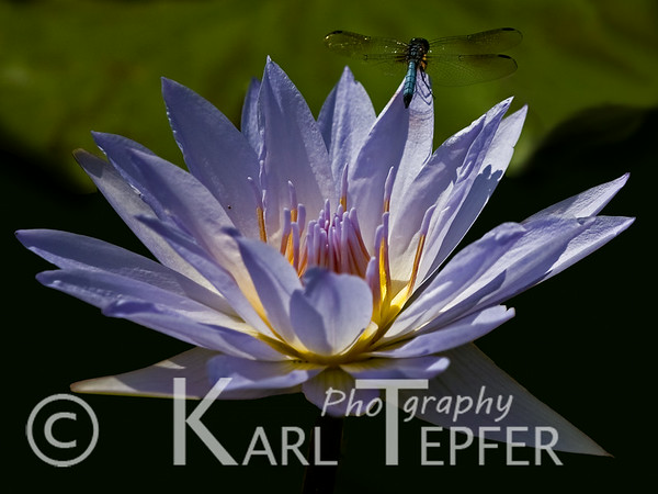 Flowers And A Few Butterflies Karl Tepfer Photography