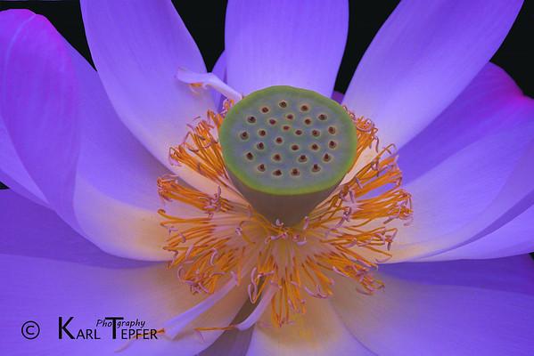 Taken at the NY Botanical Garden lilly pond.