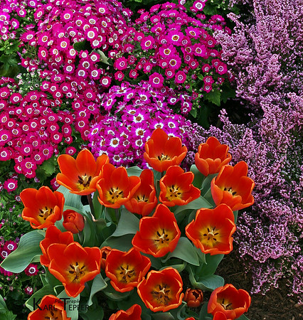 """Flower display.<br />  (c) 2008 Karl Tepfer"""""""
