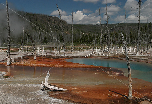 Yellowstone lansdcape<br /> © 2009 Karl Tepfer