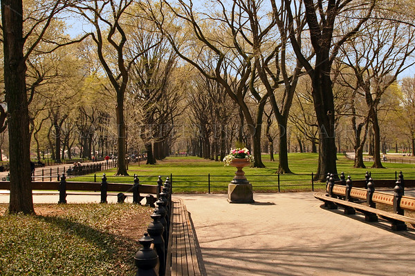 "Poet's Walk, Central Park, New York City.  Spring. Cropped for 12""x18"" print."