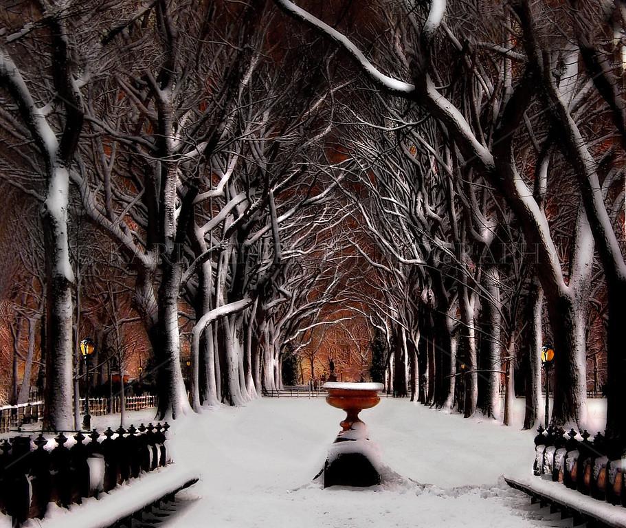 Christmas Snow    Central Park,  New York City