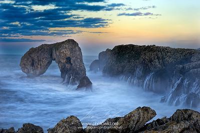 Seagulls Castro (Asturias)
