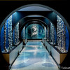 Tunnel - July 2 - -5