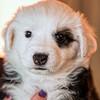 puppies_153tndc