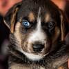 puppies_149tndc