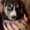 puppies_146tnd
