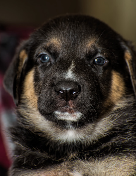puppies_190tndc