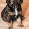 puppies_131tmdc