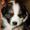 puppies_193tndc