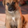 puppies_25tnd