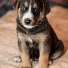 puppies_116tndc