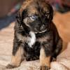 puppies_119tndc