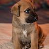 puppies_22tnd