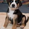 puppies_7tnd2