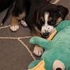puppies_145tnd