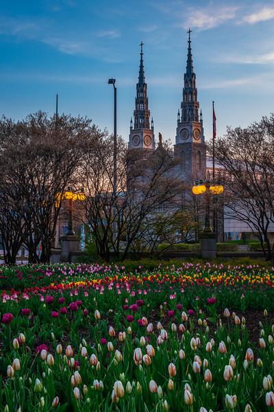 Notre Dame Cathedral Portrait