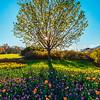 Tree of Life Portrait