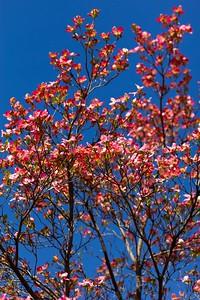 2011-04-10_Carona-San-Grato_0038